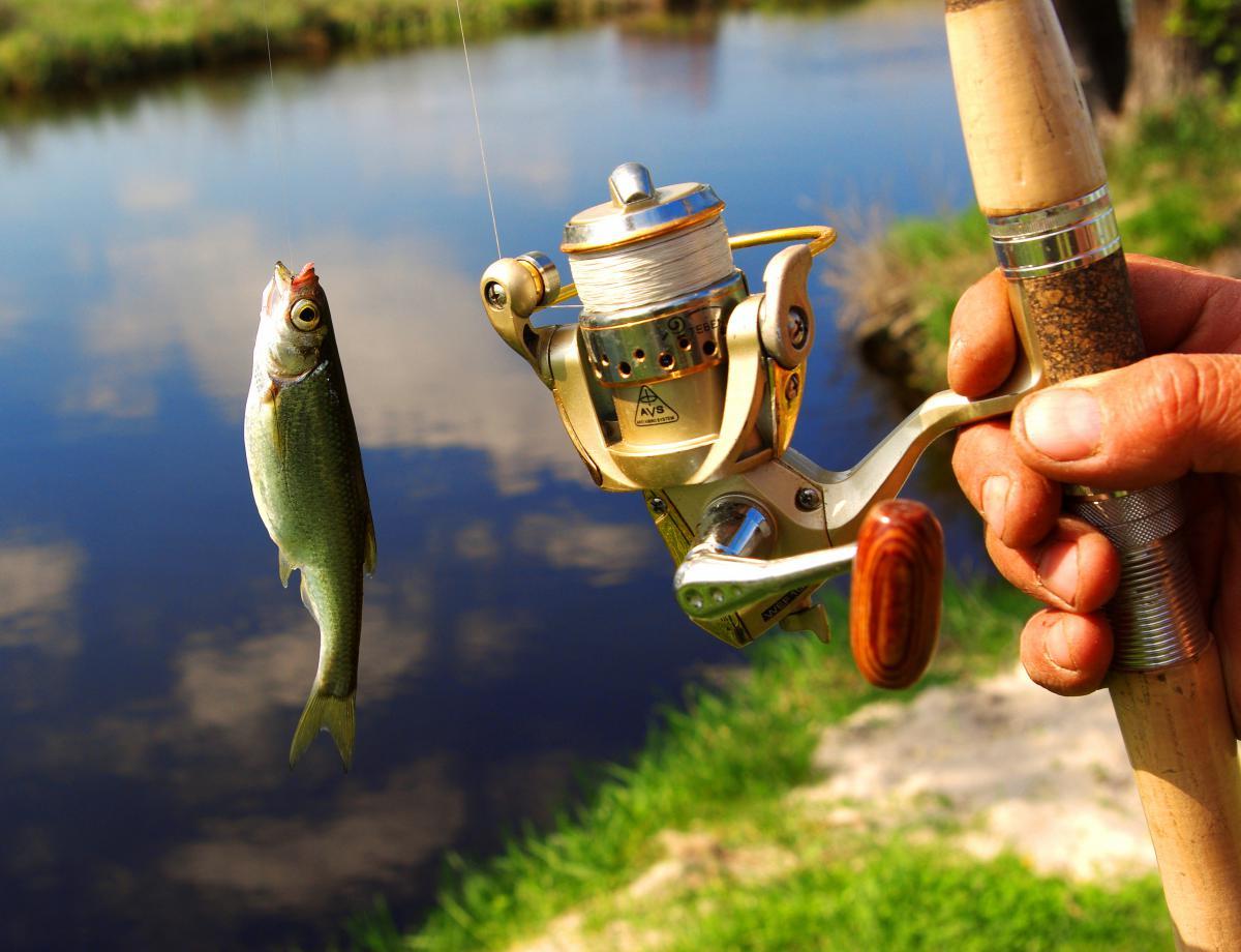 ролики удачной рыбалки